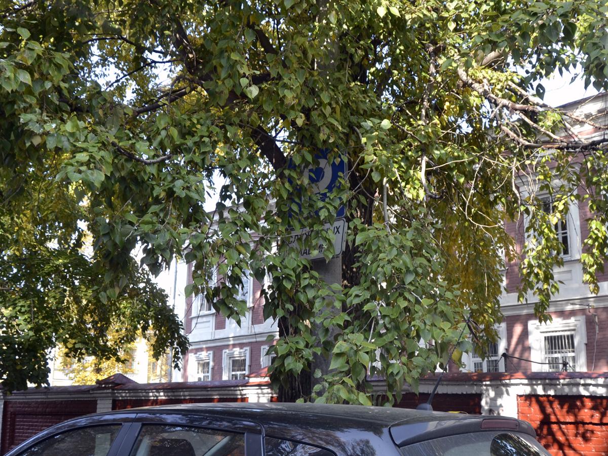 Исследование нечитаемости дорожных знаков Казани: календарные и климатические особенности